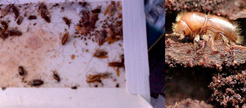Mark's Pest Control Ballarat (@markspestcontrolballarat) Cover Image