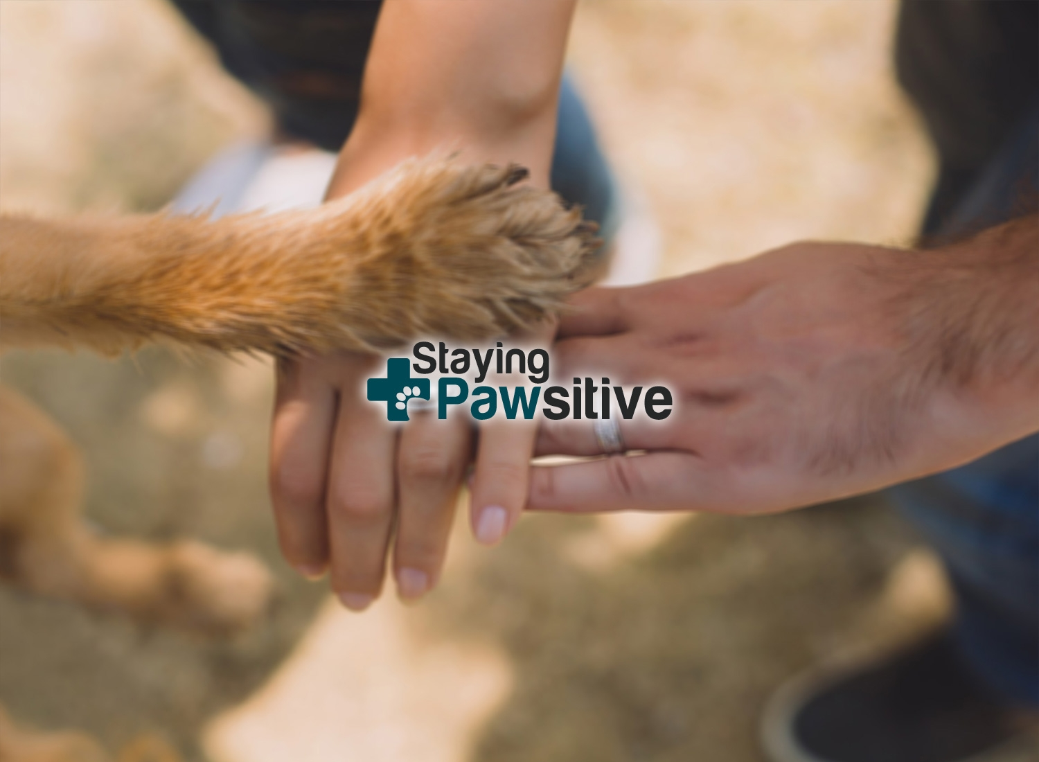 Staying Pawsitive (@stayingpawsitive) Cover Image
