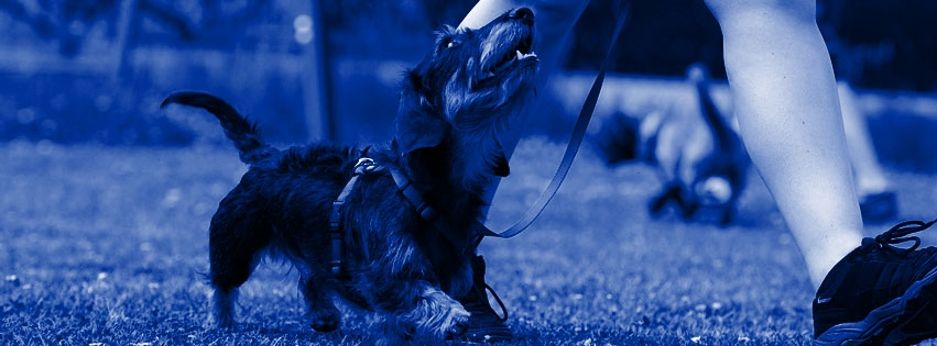 Pawsitive Action Training (@pawsitiveactiontraining) Cover Image