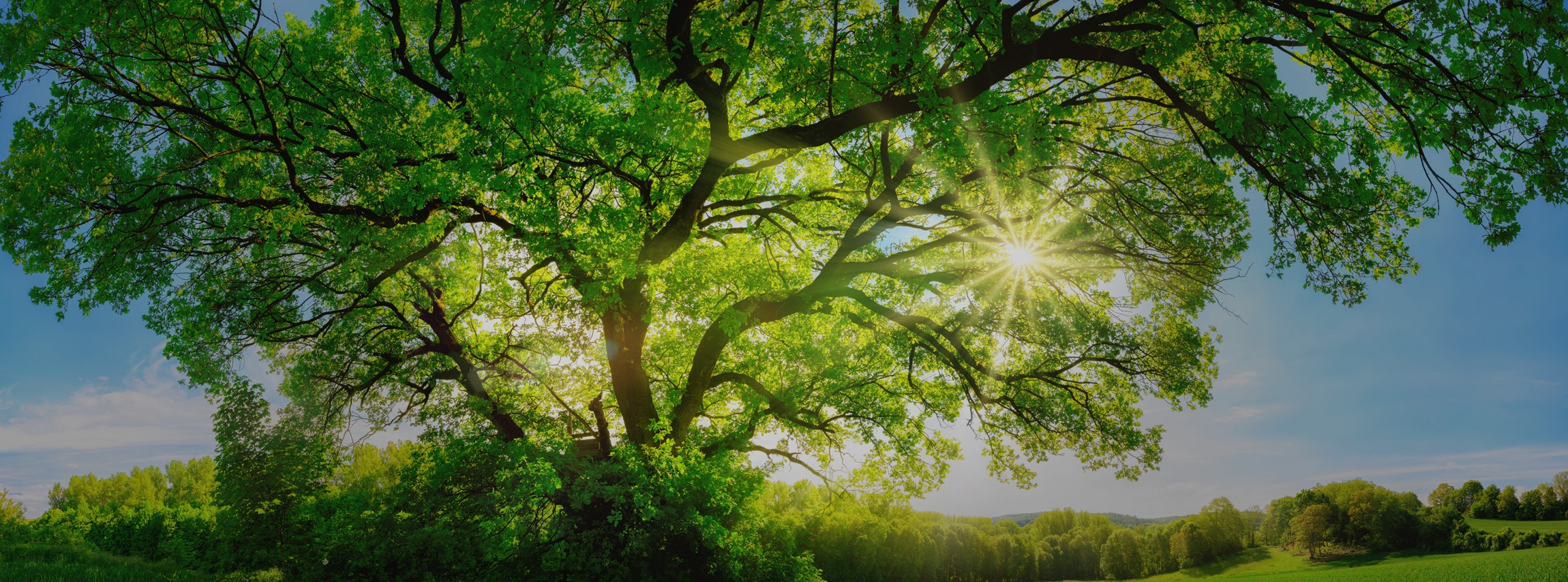 Beechwood Treesurgery Ltd (@beechwoodtree) Cover Image