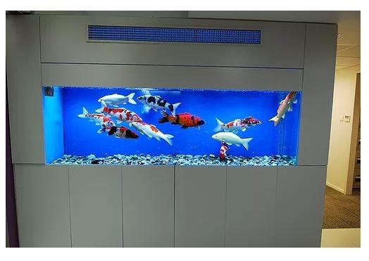 Coral Aquarium Engineering Company Ltd (@tkocoral994) Cover Image