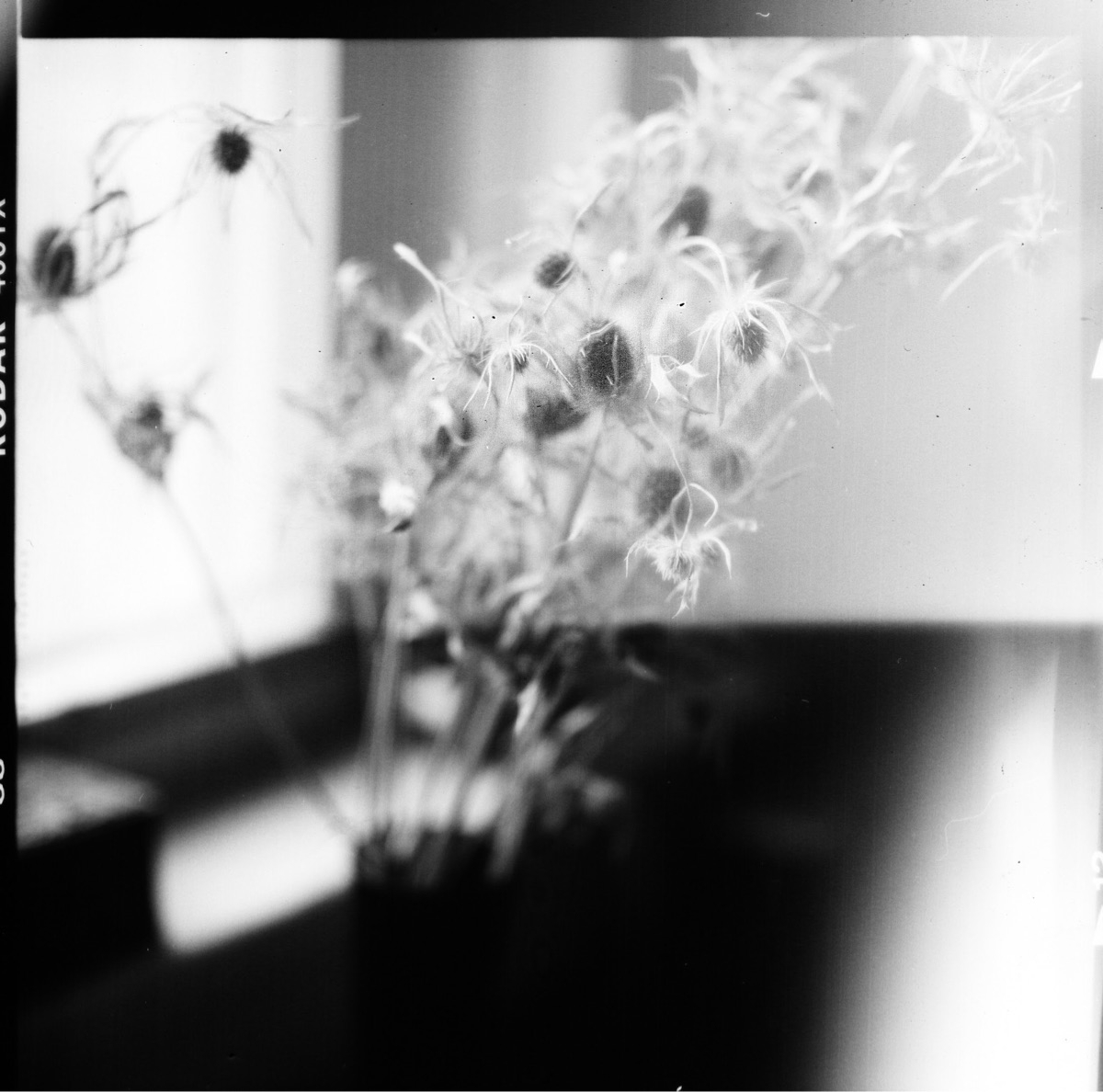 caleigh anne  (@wisteriasuspiria) Cover Image