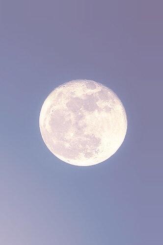 lunareapurrx (@lunareapurrx) Cover Image