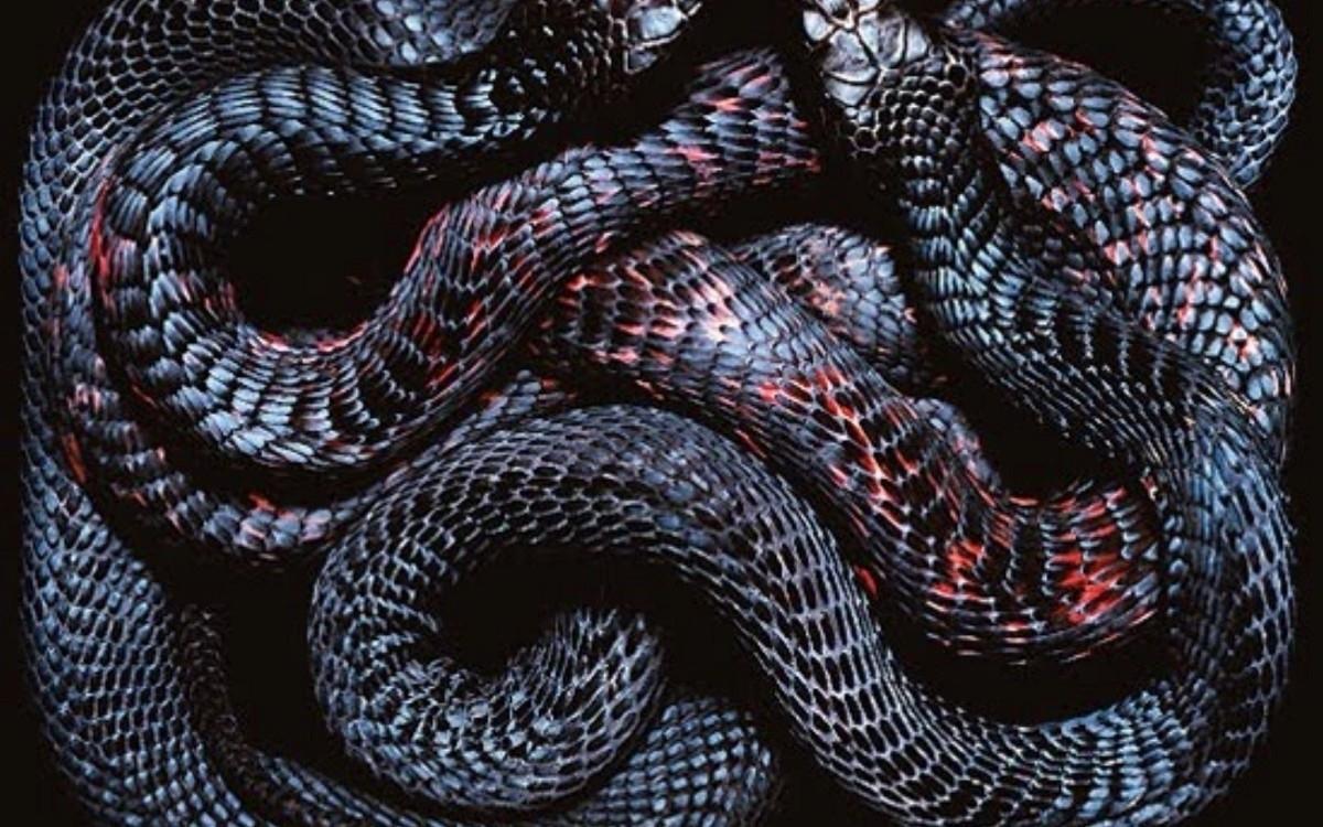 (@bad-python) Cover Image