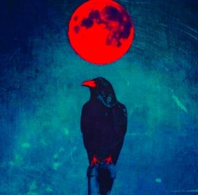 Mats (@cavant) Cover Image