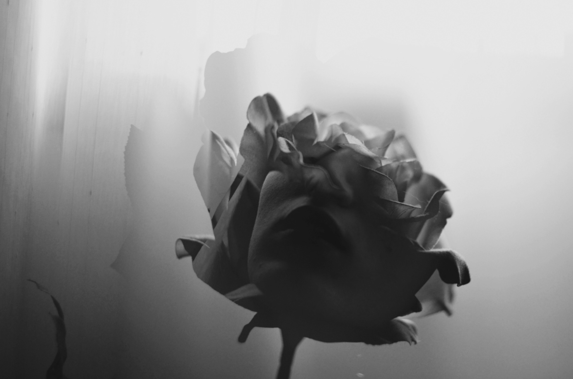 joana (@janelame) Cover Image