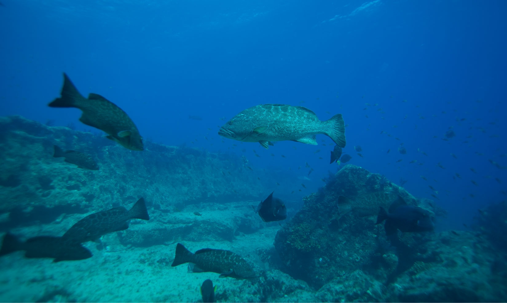 Cabo Pulmo Diving, Lodging and brewering (@cabopulmodivinglodging) Cover Image