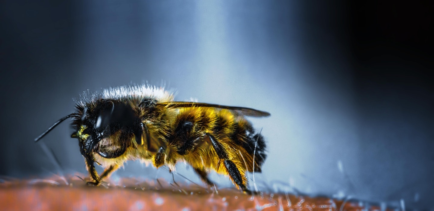 Bee Control Melbourne (@beepestcontrolmelbourne) Cover Image