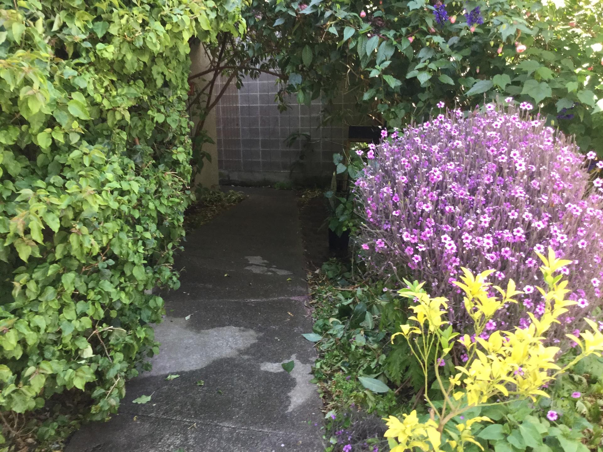 Oakland Hidden Garden (@pallas89) Cover Image