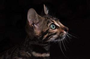 Target Pet Plus (@targetpetplus) Cover Image