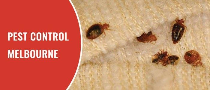 Eco Pest Control Melbourne (@pestcontrolecosafe) Cover Image