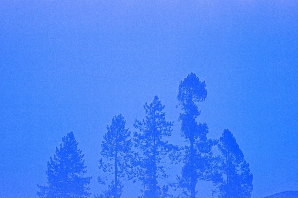 Joshua Ben-Dylan (@joshuabendylan) Cover Image