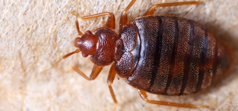 Peters Pest Control Bed Bug Control Melbourne (@peterspestcontrolbedbugcontrolmelbourne) Cover Image
