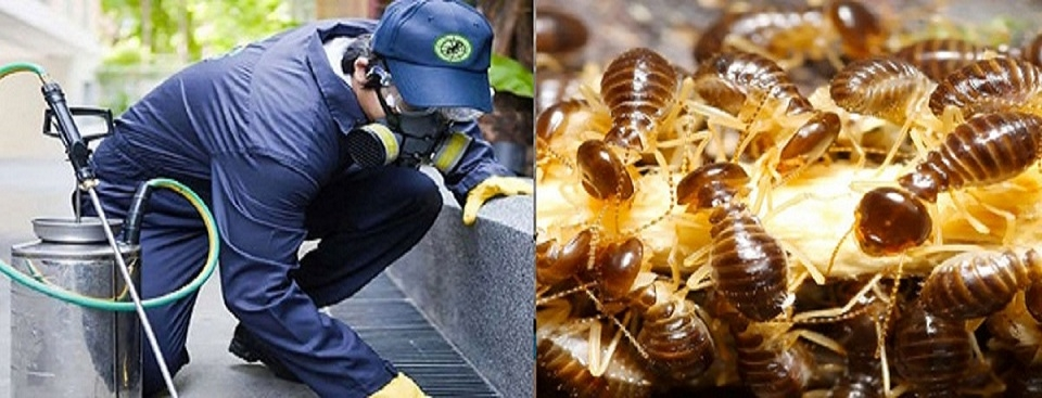 Affordable Pest Control Sunshine Coast (@back2newcleaning01) Cover Image