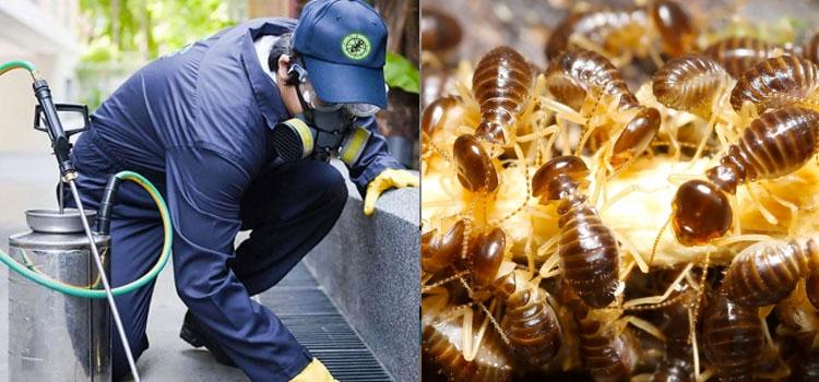Domestic Pest Control Toowoomba (@pestcontroltoowoomba) Cover Image