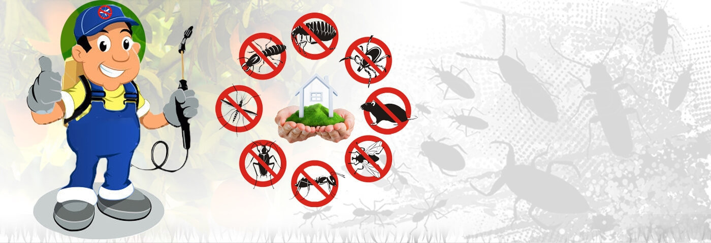 Bird Control Manly (@pestcontrolmanly) Cover Image