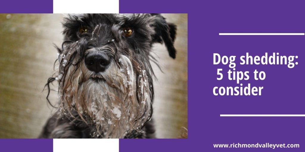 Richmond Valley Veterinary Practice (@rvvp) Cover Image