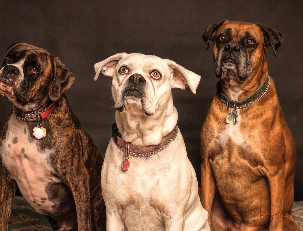 Pets Care Ca (@petscarecampus) Cover Image
