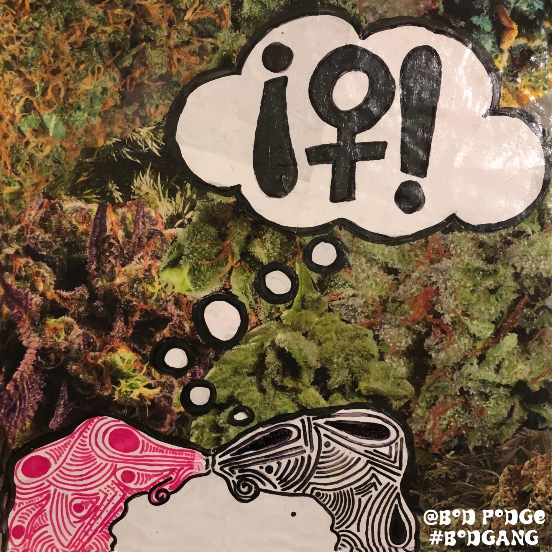 Jasmin (@bodpodge) Cover Image