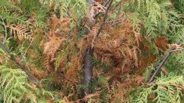 Fraser Valley Cedars (@fraservalleycedars) Cover Image