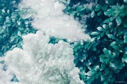 cau (@caubraga) Cover Image