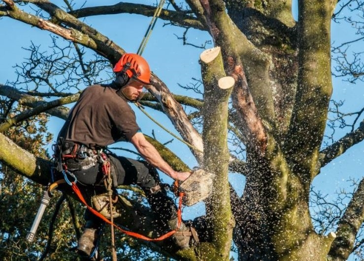 Euless Tree Service Company (@eulesstreeservicetx) Cover Image