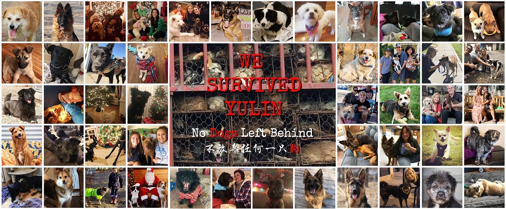 No Dogs Left Behind (@nodogsleftbehind) Cover Image