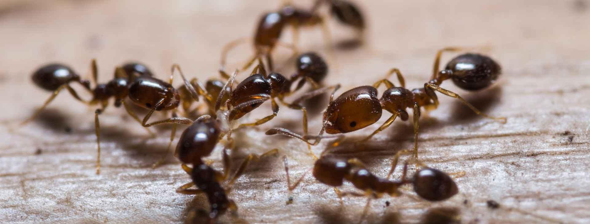 Best Ants Removal Brisbane (@antscontrolbrisbane) Cover Image