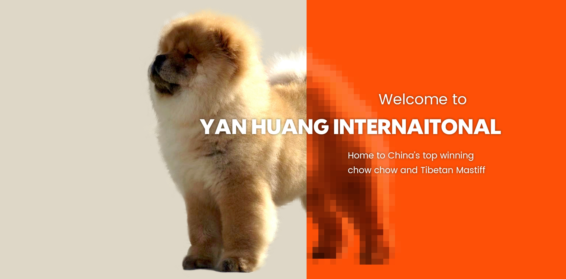 Yan Huang International Kennel (@yanhuangkennel) Cover Image