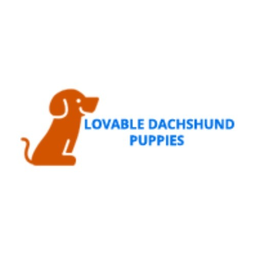 Lovable dachshund puppies (@lovabledachshundpup) Cover Image