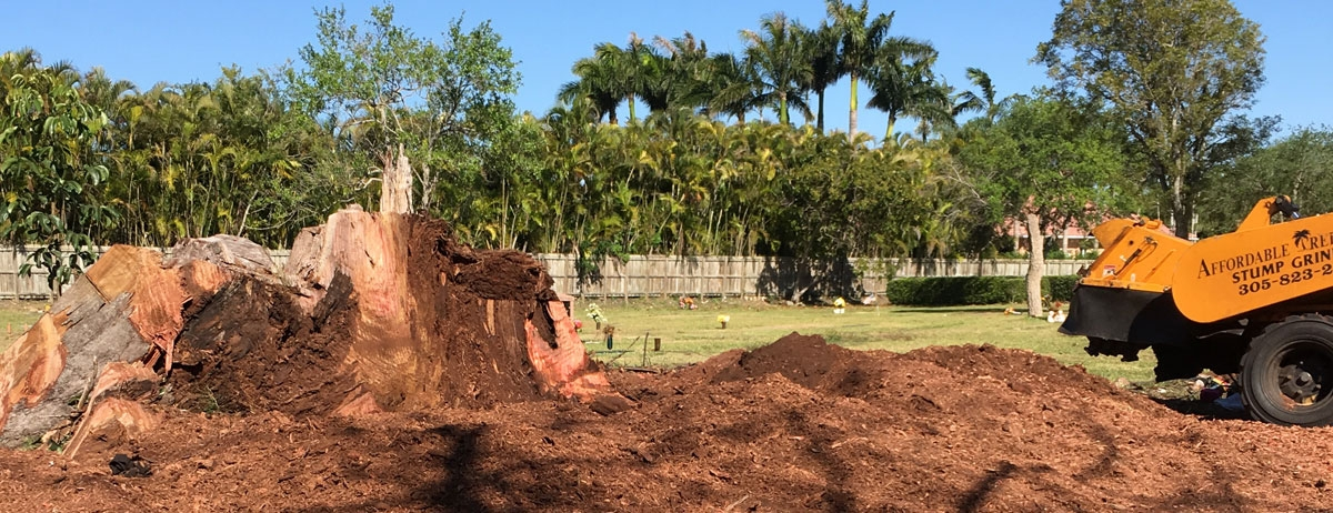 Affordable Tree Service Inc. - Tree Service Miami (@affordabletreeserviceinc) Cover Image