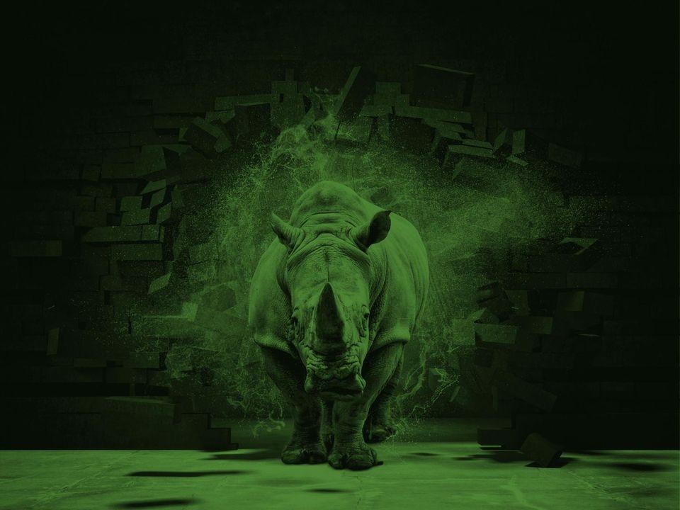 Rhino Networks (@rhinonetworks) Cover Image