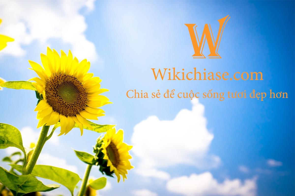 Wikichiase (@wikichiase) Cover Image