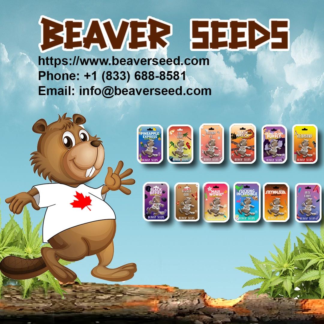 Beaver Seeds (@beaverseeds) Cover Image