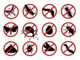 Pest Control Ryde (@pestcontrolryde) Cover Image
