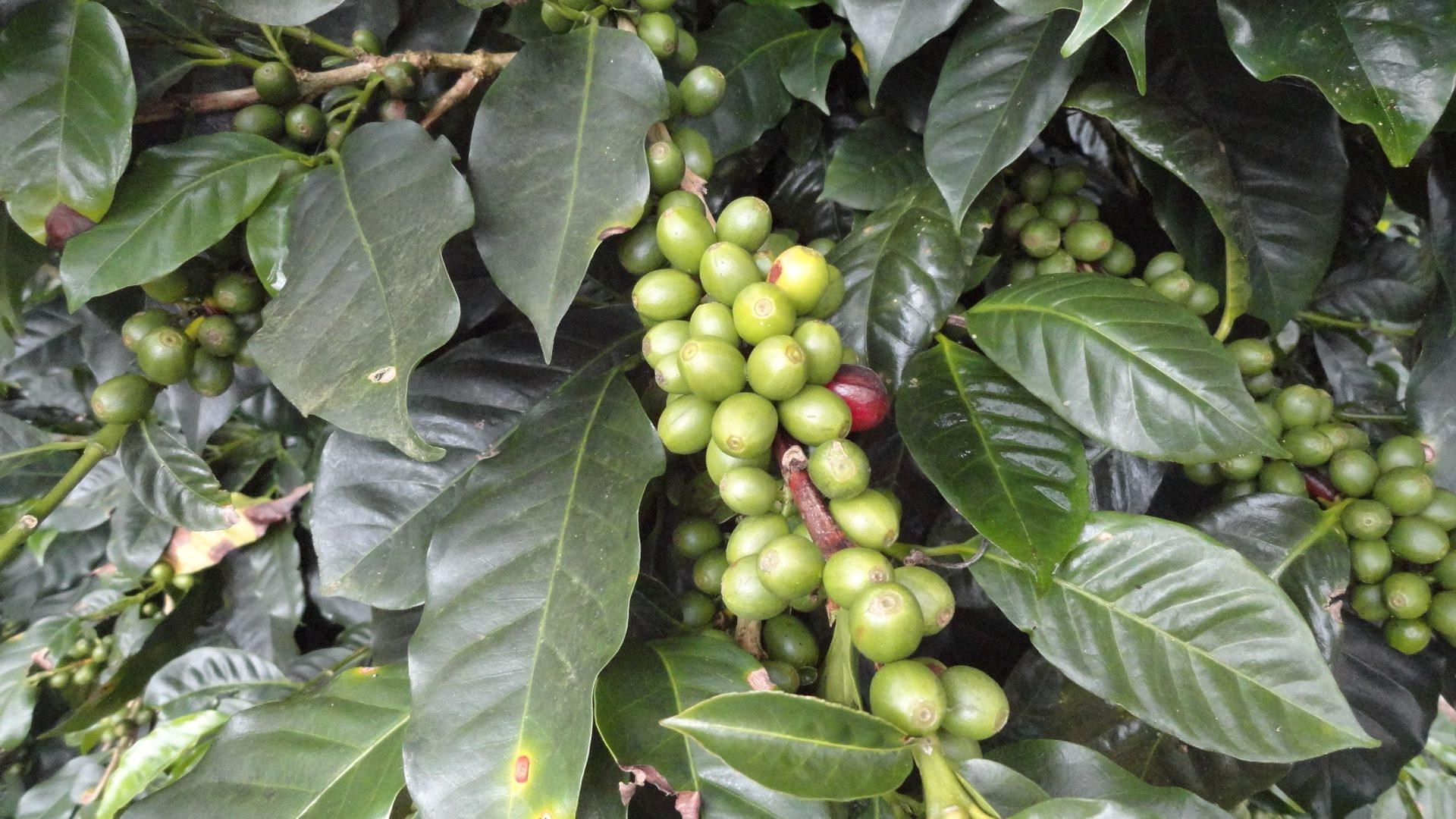 Green Coffee Traders (@greencoffeetraders) Cover Image
