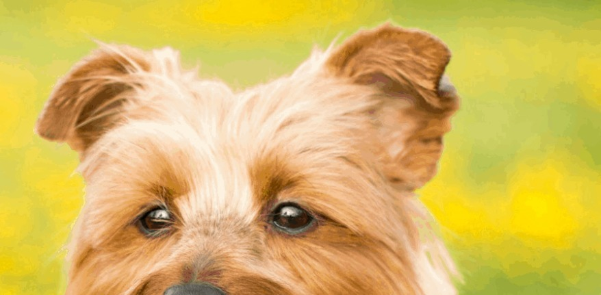 Riverview Veterinary Group (@riverviewveterinarygroup) Cover Image