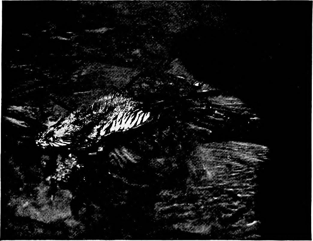 Mindaugas Gavrilovas (@studio-cryo) Cover Image
