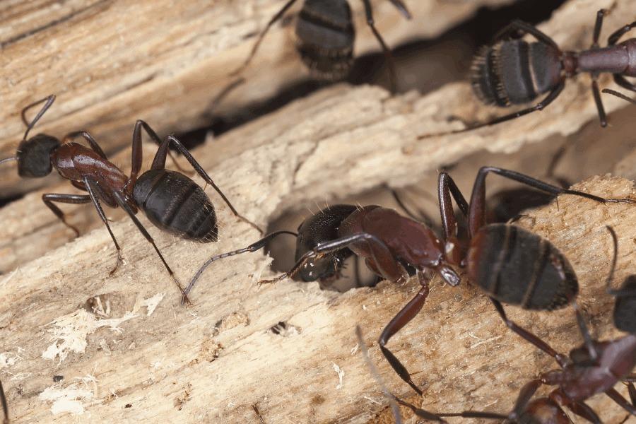 Pest Control Leichhardt (@pestcontrolleichhardt) Cover Image