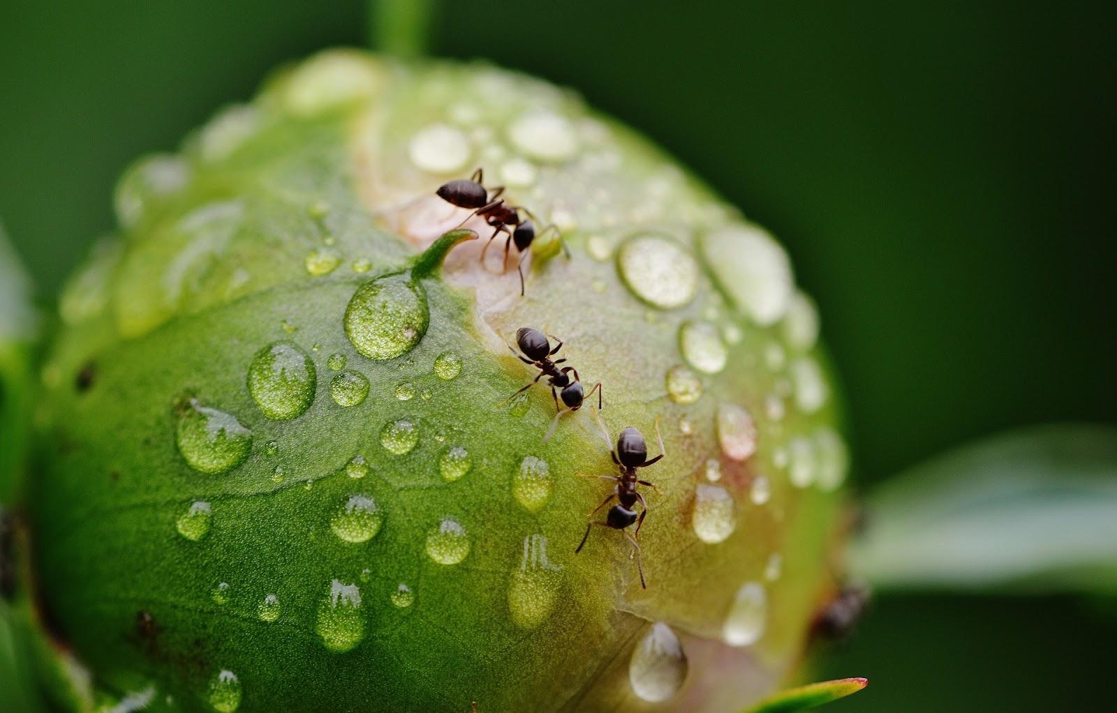 Pest Control Ellenbrook (@ellenbrookpestcontrol) Cover Image
