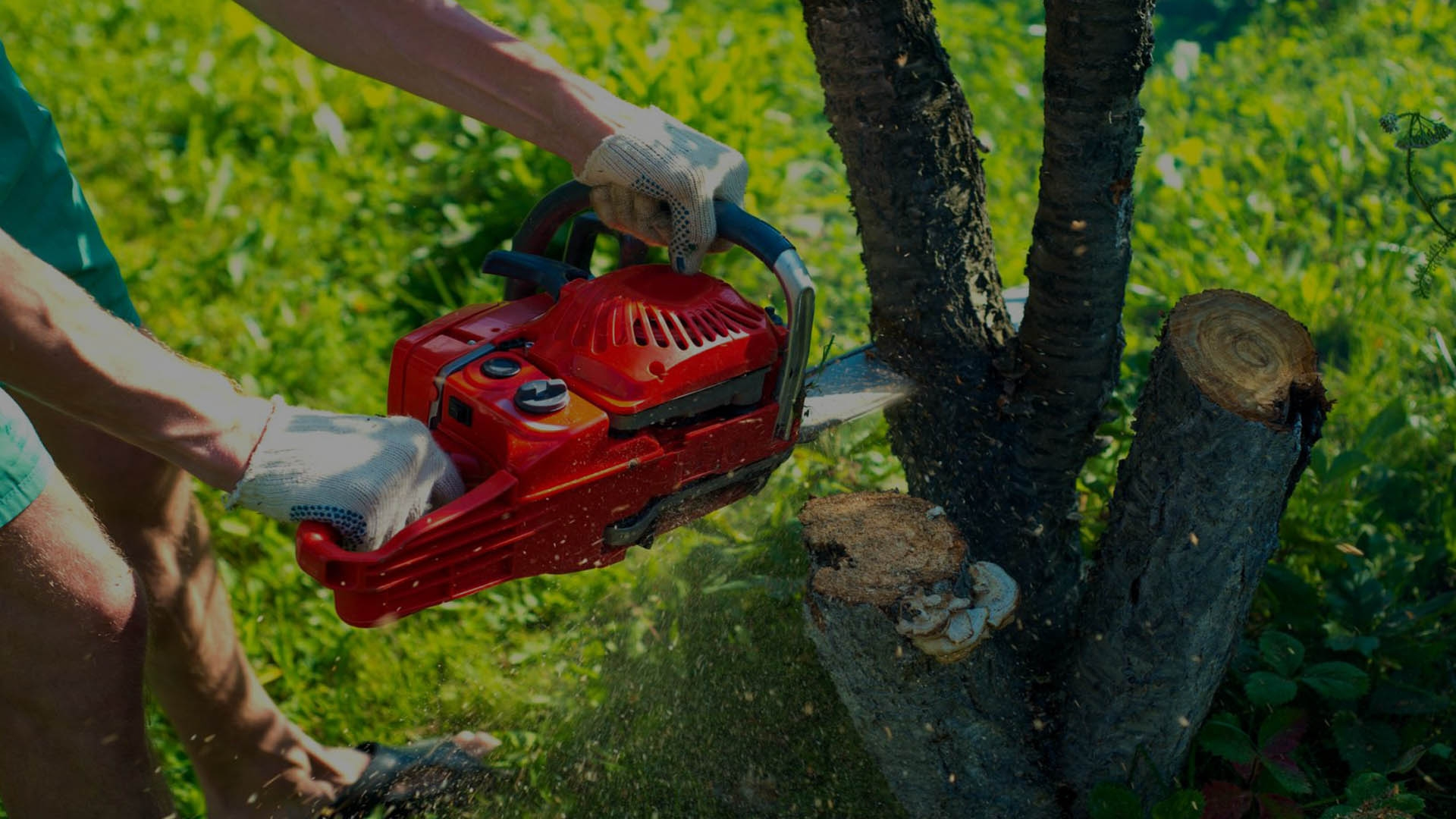 Pikesville Tree Service (@pikesvilletreeservice) Cover Image