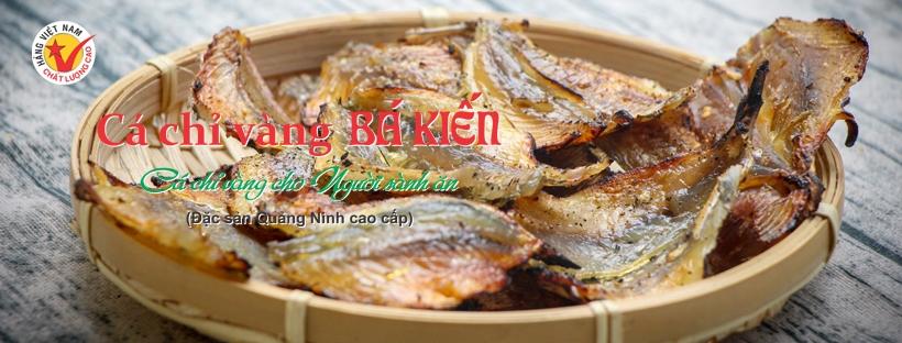 Cá chỉ vàng (@cachivang) Cover Image