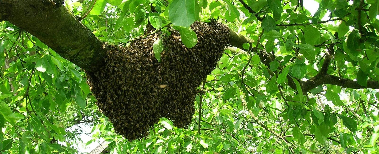 Wild Honey Hunters (@wildhoneyhunters) Cover Image