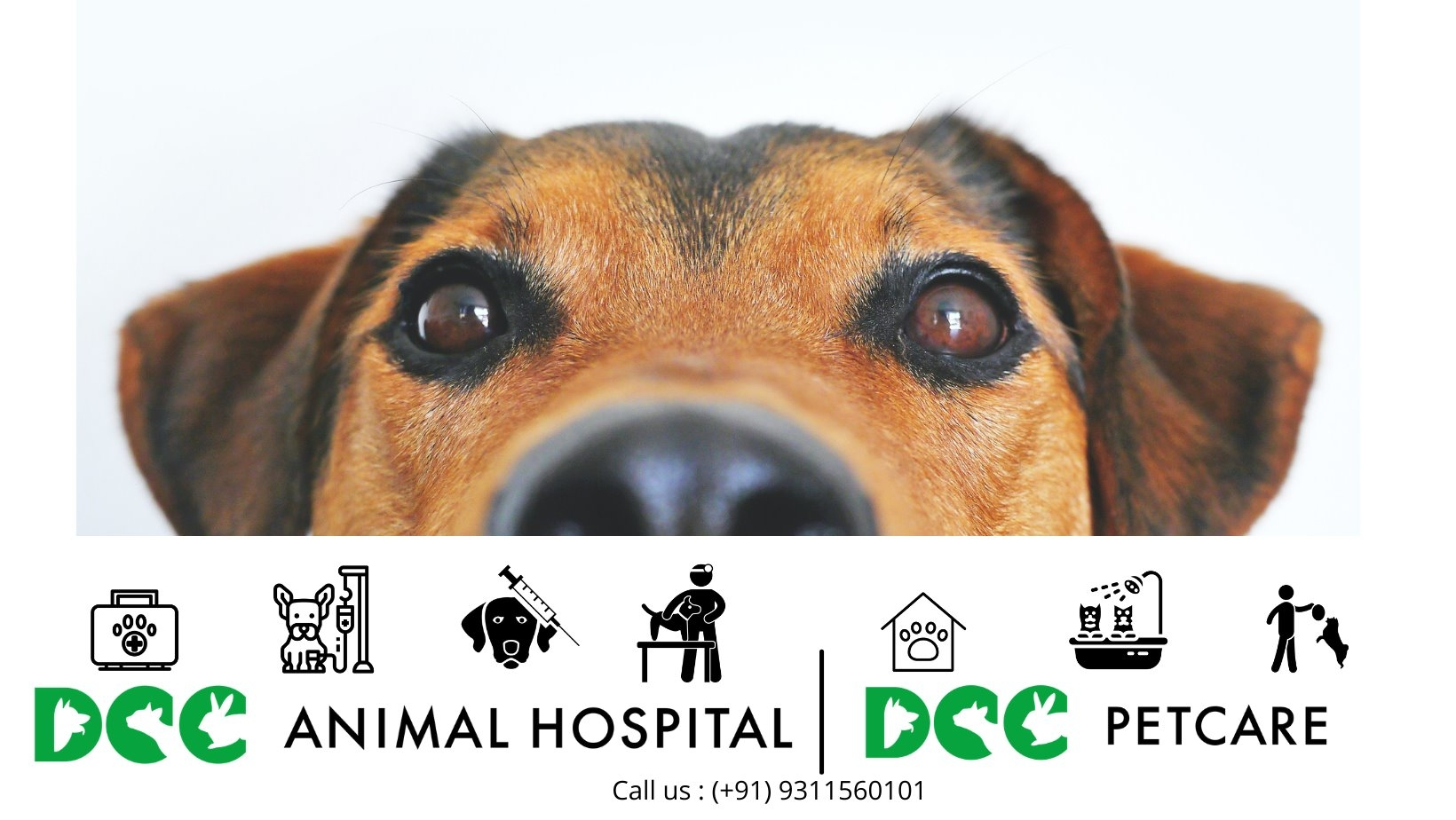 dccpets (@dccpets) Cover Image