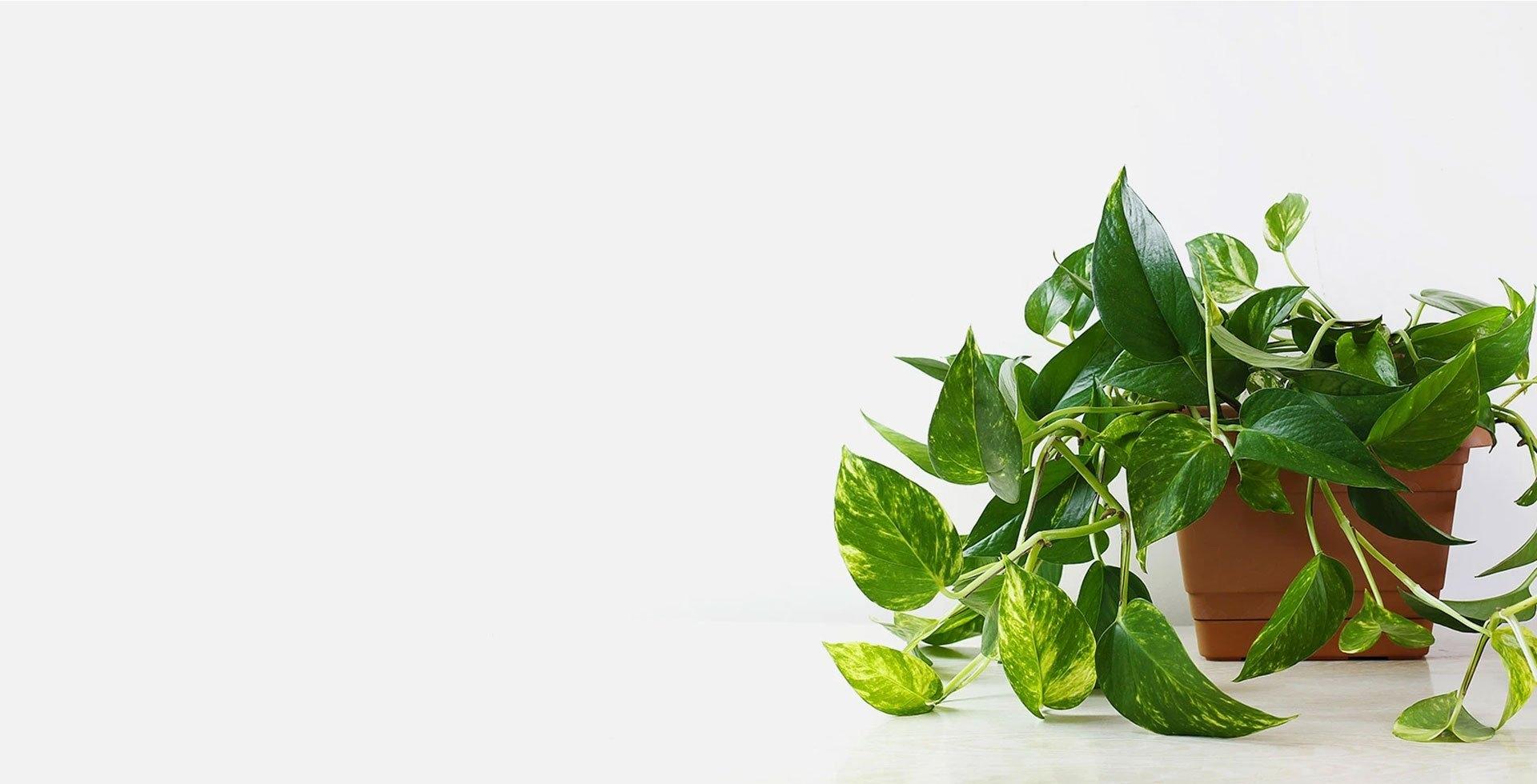 Pots & Plants (@potsplants) Cover Image