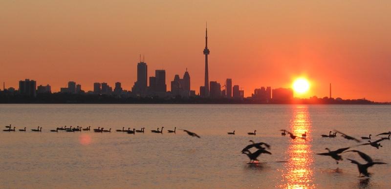 Toronto News Blog (@torontonews) Cover Image